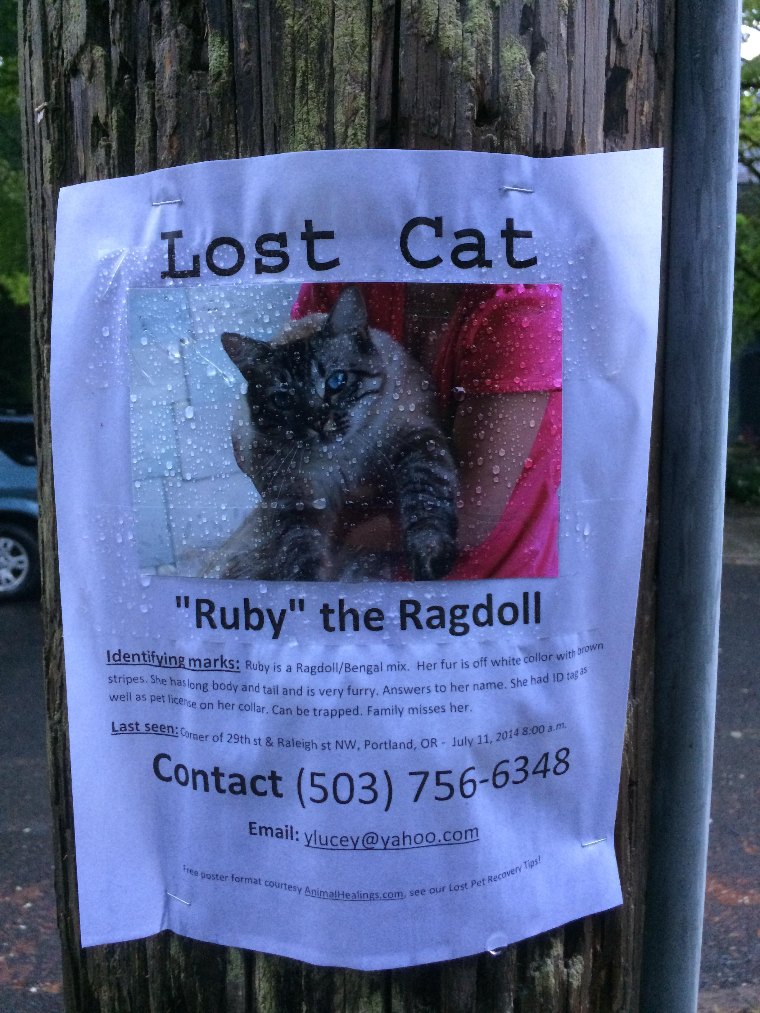 Lost-cat-poster