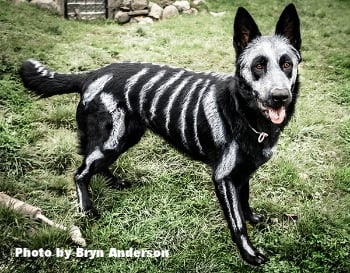 Cat and Dog Halloween Costumes: Is It Safe To Dye My Pet\'s Fur?