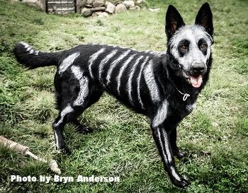 Dogs   Preventive Vet   Halloween