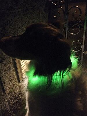 nighttime-visibility-collar