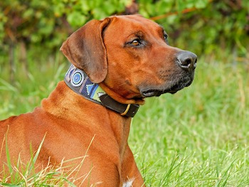 Dog-neckwear