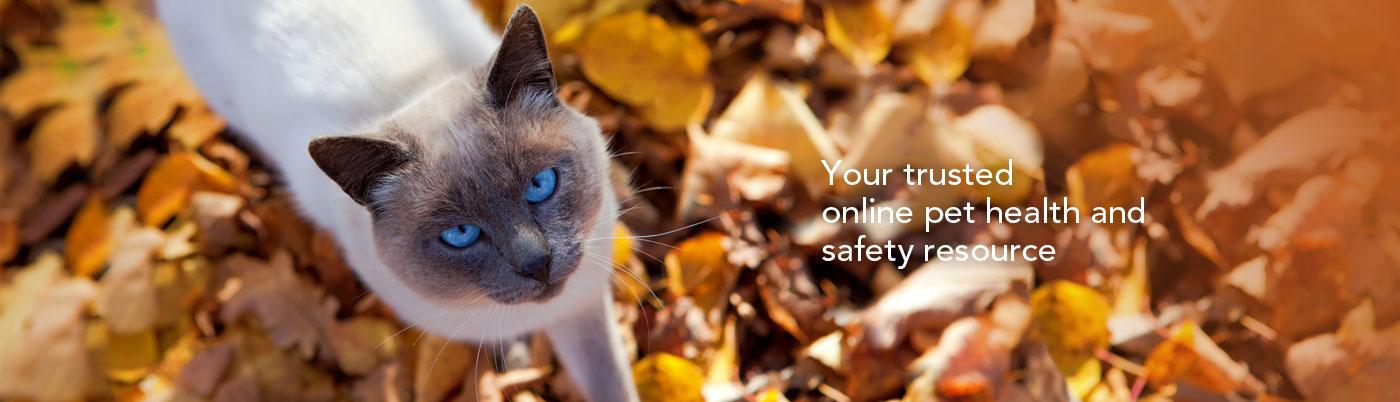 slide_fallcat.jpg