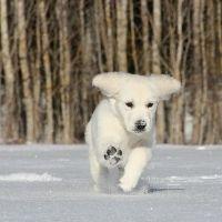 Dog-in-snow-Tip