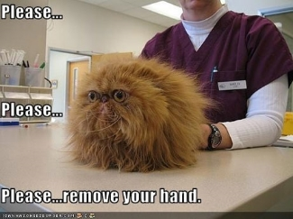 Please-remove-hand-vet-visit
