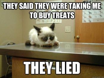 cat-vet-visit