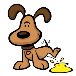 Can T Get Urine Sample From Dog