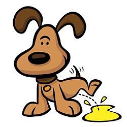 dog pee get a urine sample