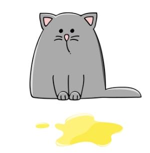 Cat-pee-urine-sample
