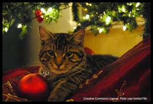 The-12-Pet-Hazards-of-Christmas-Day-6-Ornaments-image-2