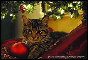 Deck_The_Halls_The_12_Pet_Hazards_of_Christmas_(Day_6_-_Ornaments_and_Other_Tree_Decorations)-image-2