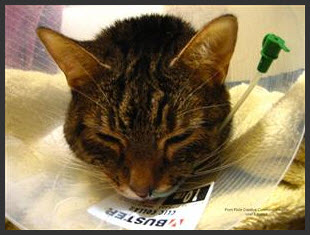 Is_Pet_Insurance_Worth_It-Image-2