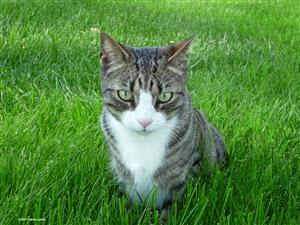 my--cat-cant-pee-feline