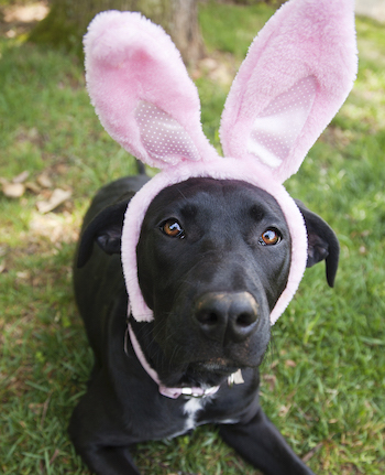 Keep_your_pets_safe_and_out_of_the_ER_this_Easter-Image-1