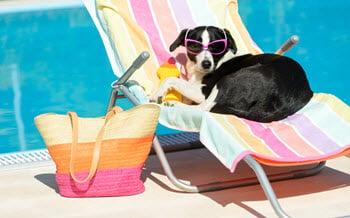 summer-pet-safety