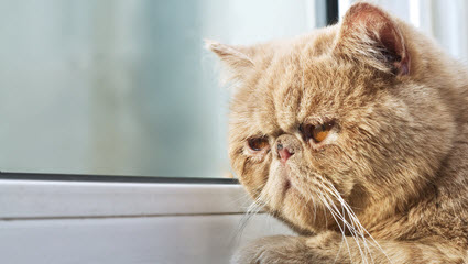 cat-signs-of-pain