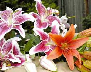 lilies are extremely toxic for cats