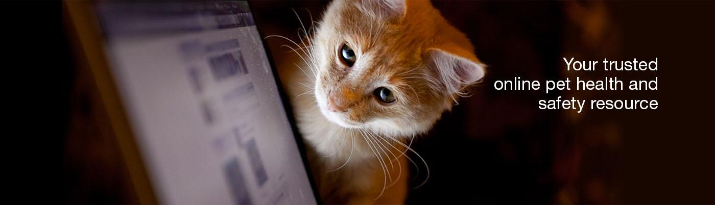 online-cat-tips