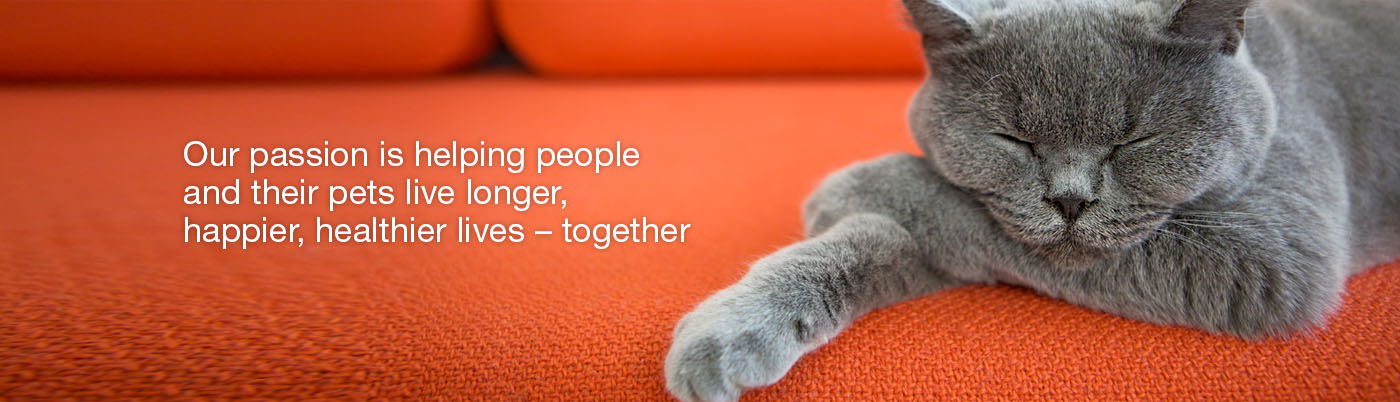 cat-pet-health