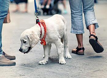 leash-walking-dog-rec