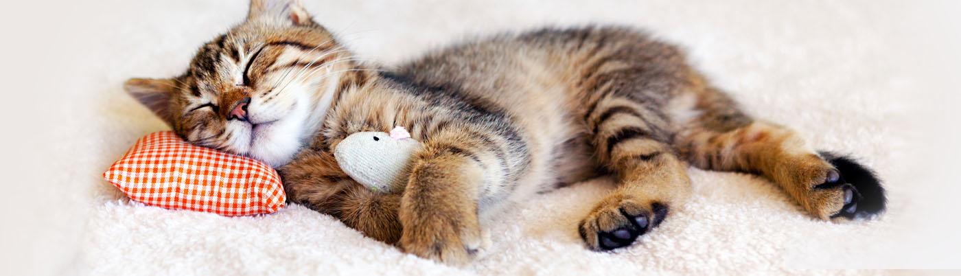 slide-cat.jpg
