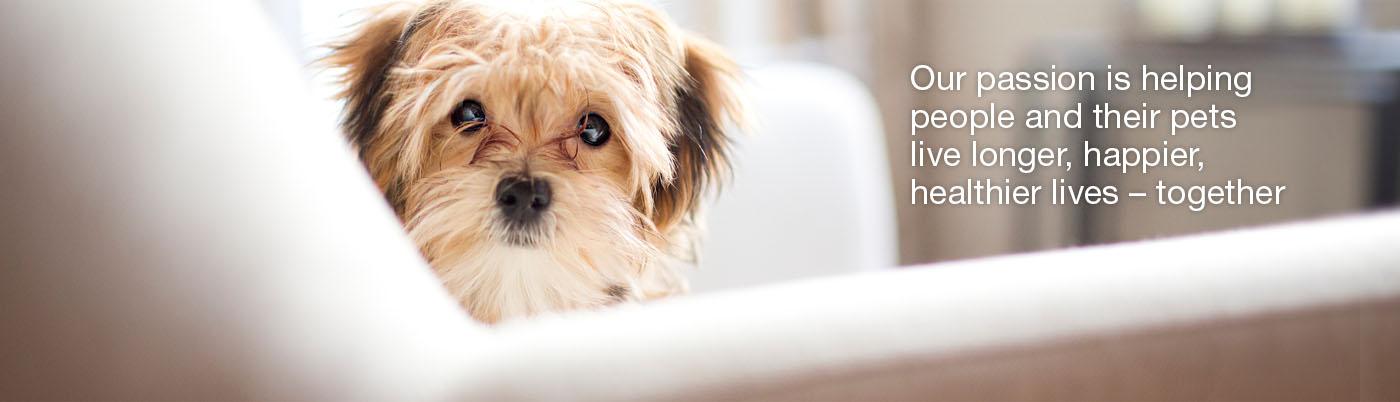 dog-health