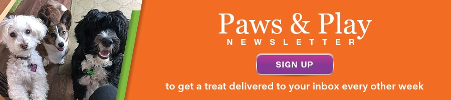 Your Pet's Microchip    Is It Registered? Up-To-Date? Here's