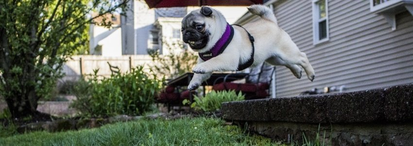 10 point checklist to puppy proofing your house