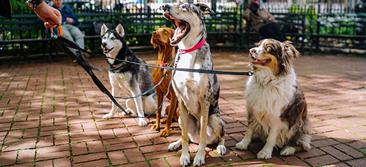 four dogs on the end of a leash on a walk