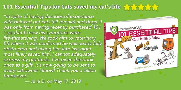 101-cat-tips-review-stars
