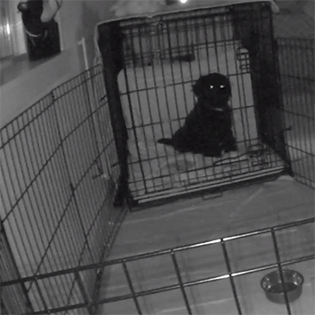 Puppy in crate at night