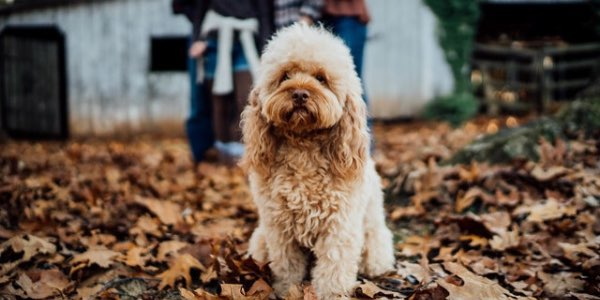 Aslan dog the protector dies of xylitol poisoning