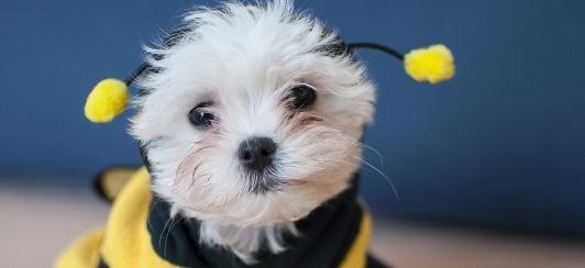 Bee-prepared-landing