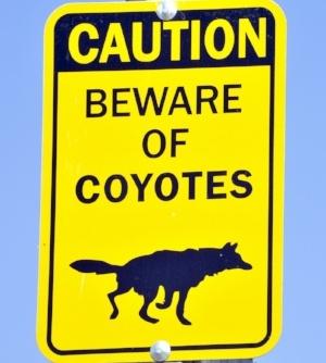 Beware-of-coyotes-sign.jpg