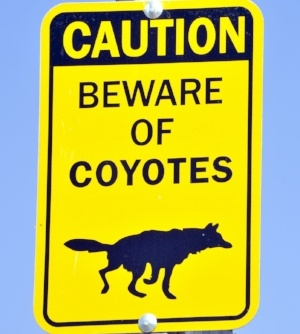 Beware-of-coyotes-sign.jpg