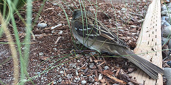 When Birds and Windows Collide: What You Can Do to Help