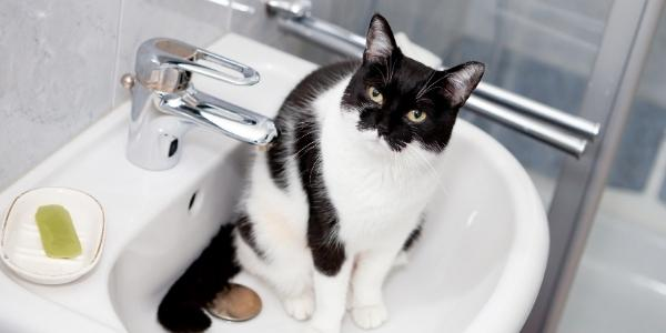 Black and white cat sitting in clean sink
