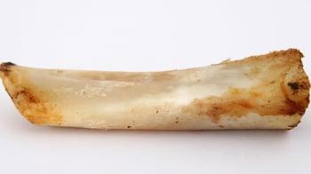 Bone that is too hard for dog teeth