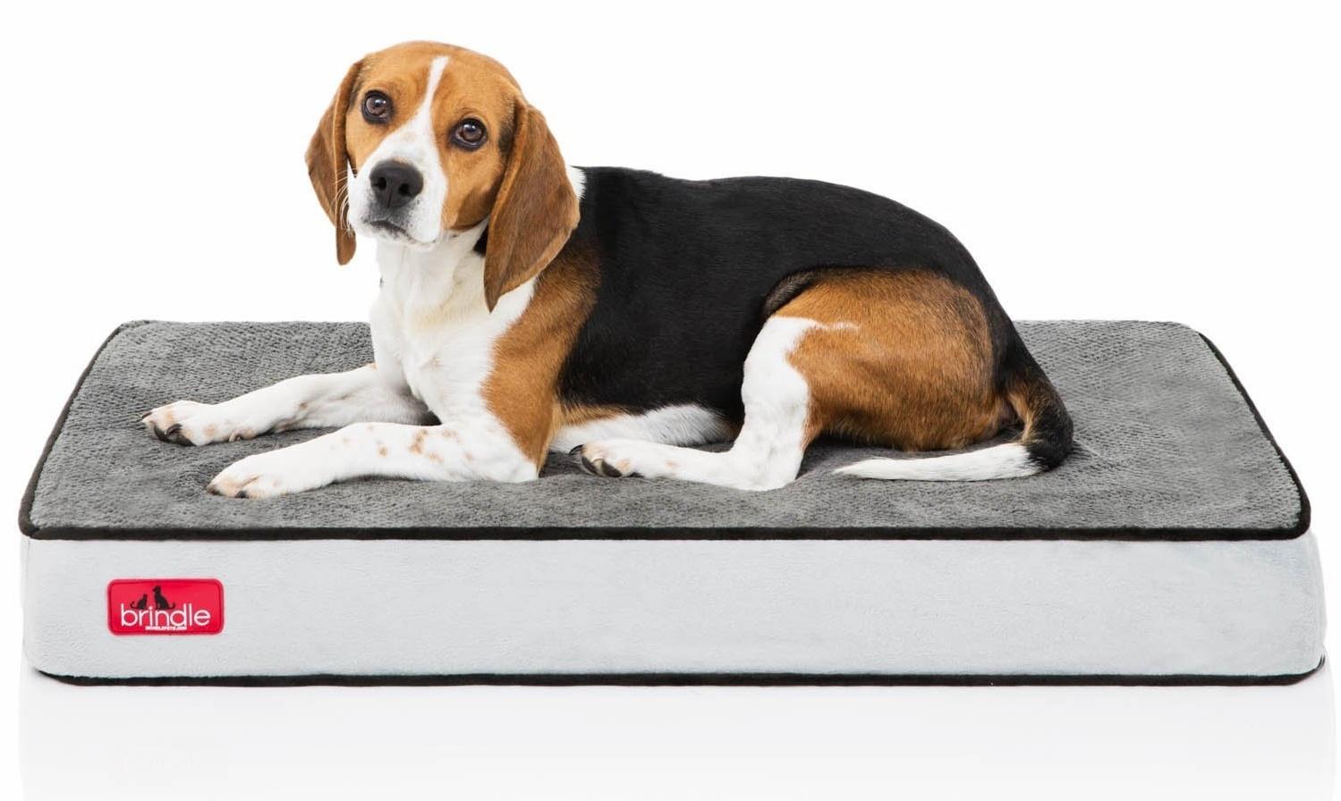 Brindle-foam-dog-bed