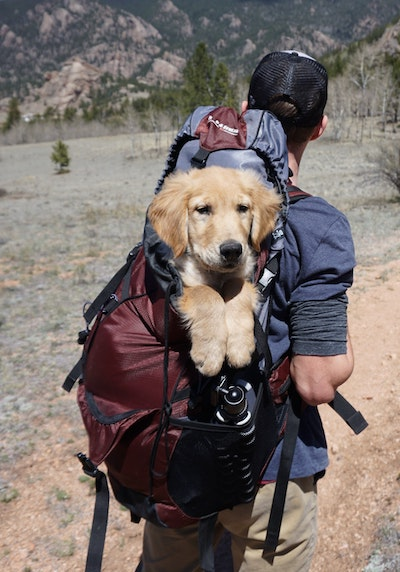 Camping-with-your-dog.jpg