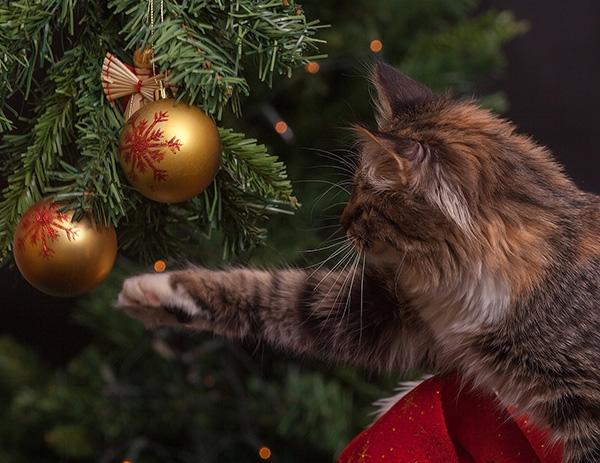 Cat Batting at Christmas Tree Ornament