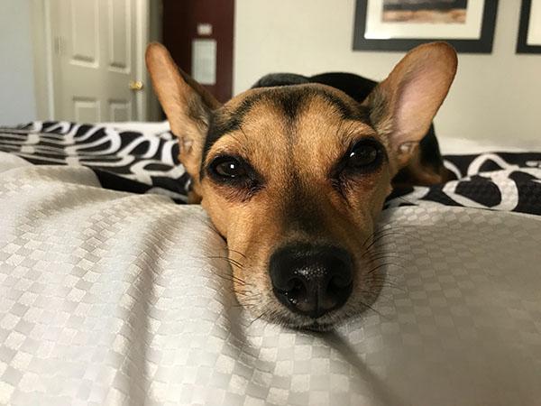 dog-sleep-on-bed