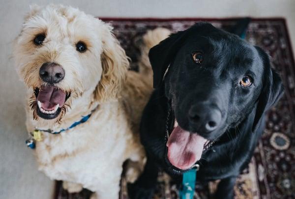 happy-dog-fun