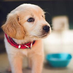 puppy-what-to-buy-for-comfort