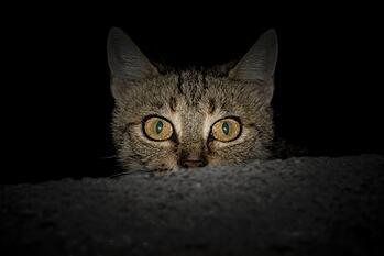 Cat Dark Peeking Over Wall