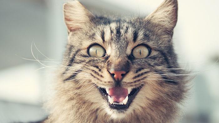Cat Funny Face.jpeg