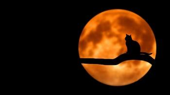 Cat Red Moon.jpg
