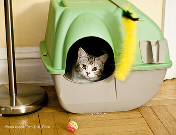 Cat in Covered Litter Box-614172-edited.jpg