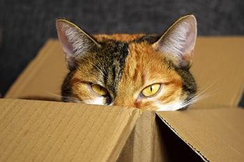 Cat in a Box-350