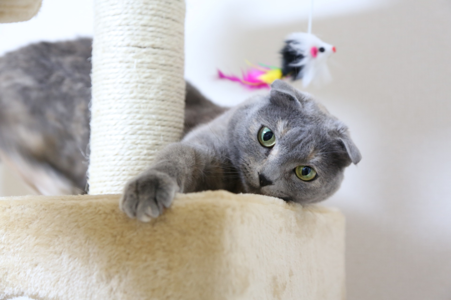 Cat on Cat Tower With Feather