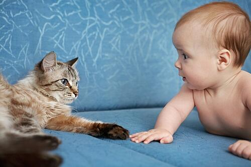 Cat with Baby on Couch